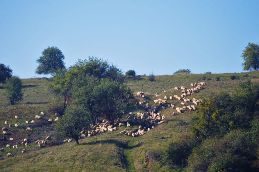 Transylvania at the beginning of October